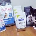 Photos: 06_12キャットフードと猫