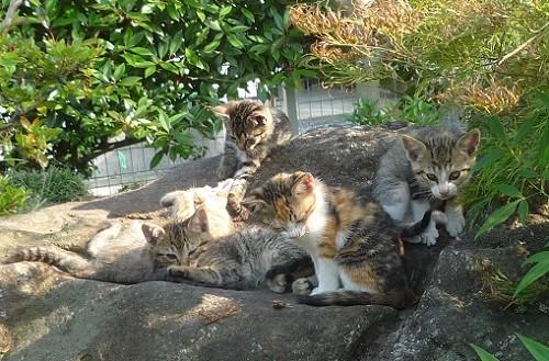 06_13チビ猫