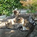 Photos: 06_13チビ猫