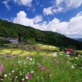 写真: 山奥の棚田