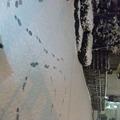 写真: 雪に足跡で「V6」って書いてみた。笑