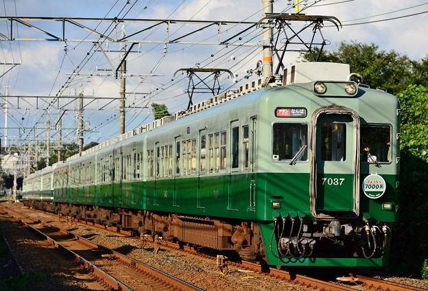 南海本線 サザン8号 7037F