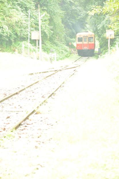 小湊鉄道 緑のトンネル