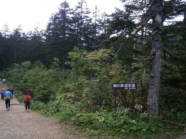 ts066 栂の森遊歩道