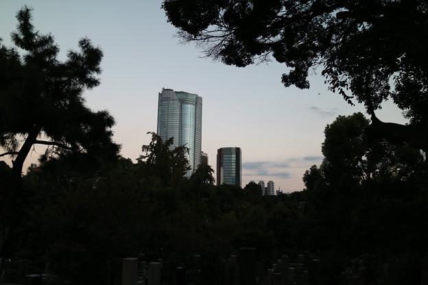 青山霊園 - IMG_0267