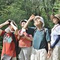 Photos: 今日は野鳥では有りません・・マツグミヤドリギ(松茱萸宿木) ヤドリギ科