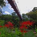 Photos: 見上げる吊り橋