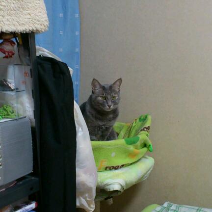 仔猫を見てる…