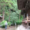 Photos: 15.06.19.御霊神社(鎌倉市)