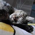 Photos: 爆睡中!