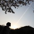 Photos: 桜より夕日