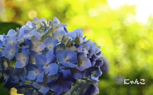 写真: ~青に染まり~