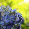 ~青に染まり~