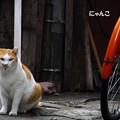 ~オレンジ色の~