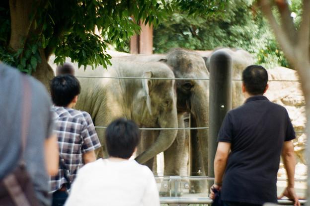 象見る人々