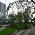 Photos: 150718-3 豊島区新庁舎の屋上庭園