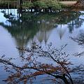 写真: 霞ヶ池&唐崎の松?