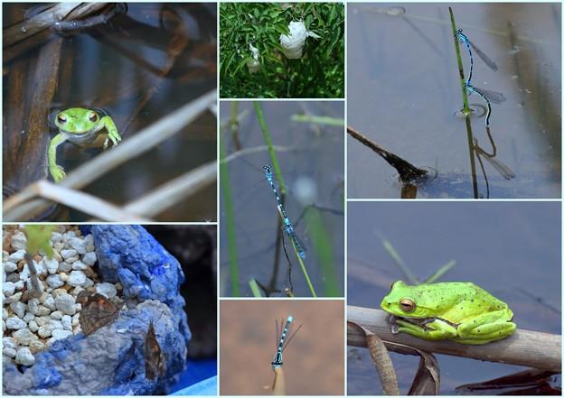 白山パノラマ公園の生き物