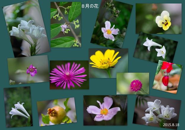 8月の花?