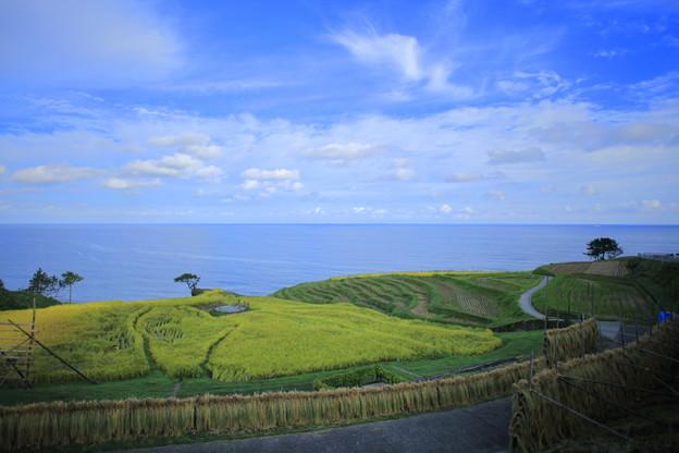 輪島 早朝の白米の千米田 稲架がけ(はざがけ)1  海と青空