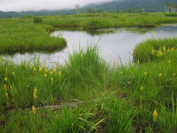 13.16 池塘とキンコウカs