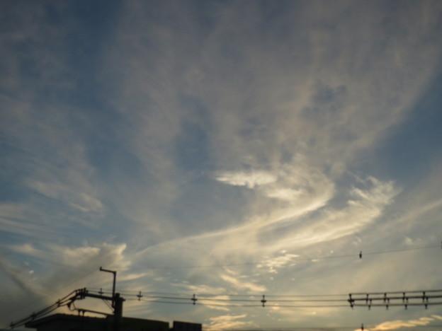 Photos: 鳳凰の尻尾