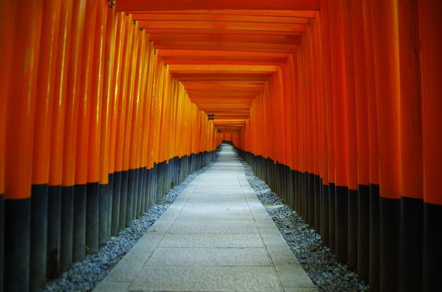 Photos: 伏見稲荷の千本鳥居