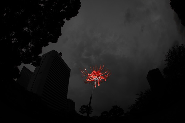 写真: Memento Mori