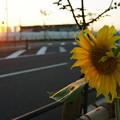 Photos: 黄昏の太陽