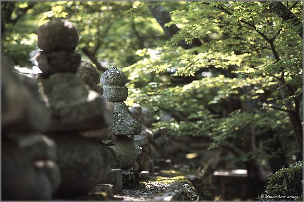 Photos: 化野