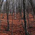 赤い地と樹木達