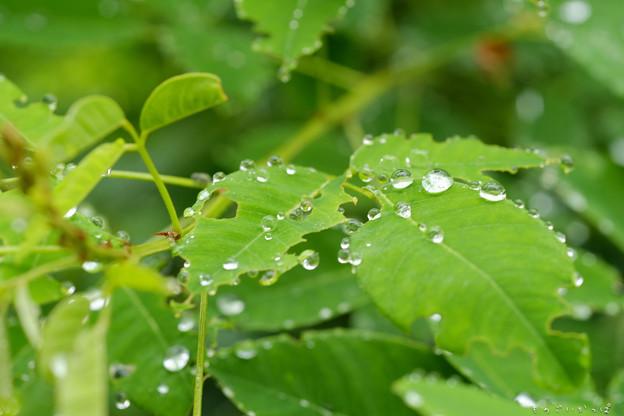 雨粒-3267