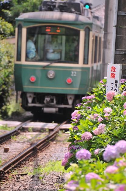 江ノ電 御霊神社付近で。。見れる紫陽花。。6月20日