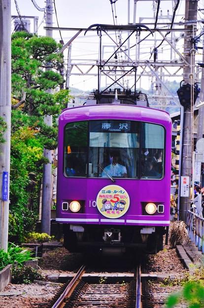 長谷駅へ向かう紫色の江ノ電紫陽花色電車。。6月20日