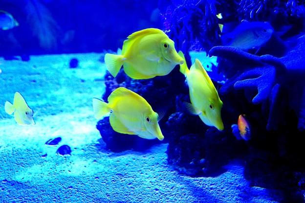 年越してオールナイトの八景島シーパラ水族館・・20150101