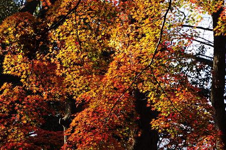 下鴨神社の紅葉(D90)-2
