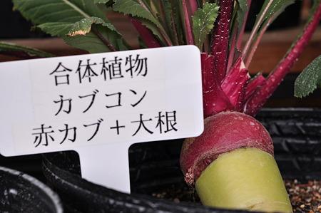 奈良県フラワーセンター・3