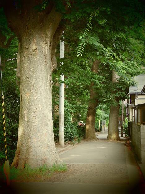 路上の巨木 vol.2