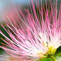 Photos: 栗の花です!