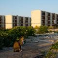 写真: 島猫と廃虚(池島)