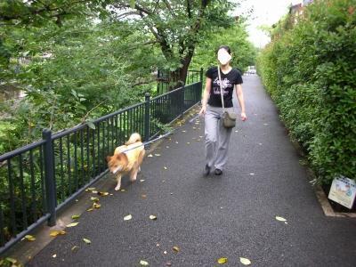 少し散歩してこ