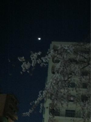 夜桜と三日月