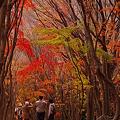 Photos: 河内藤園の紅葉?
