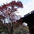 写真: R0010036