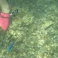 写真: アルパット島近くで熱帯魚その06