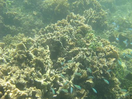 アルパット島近くで熱帯魚その17