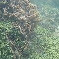 写真: 相方撮影の熱帯魚21
