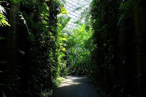あふれる熱帯植物