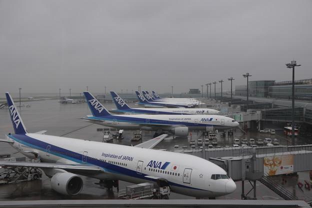 写真: 羽田空港 ANA ラッキー7
