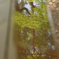 Photos: 水鏡が映す、新緑の季節